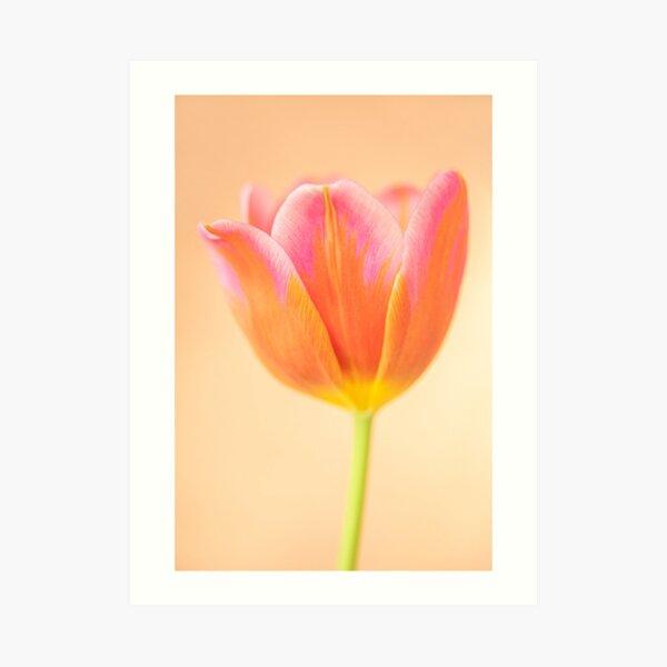 Rainbow Tulip Art Print