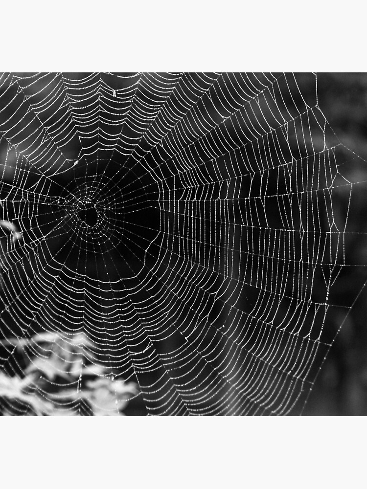 Spider Web by robcole