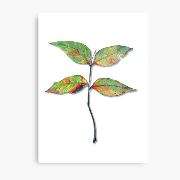 Chinese Pistache Leaf Metal Print