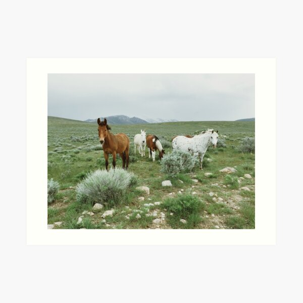 Wild Nevada Horses Art Print
