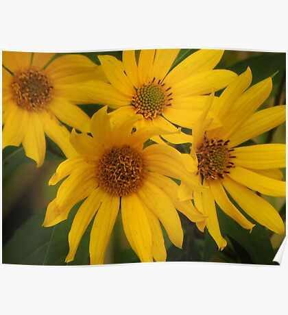 Late Summer Blooms Poster