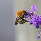 bumble bee by kaotic-shell