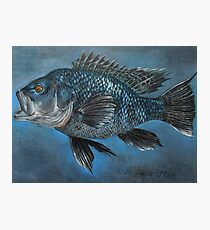 Black Sea Bass Photographic Print