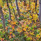 Forest Colors by Bo Insogna