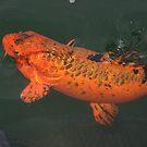 FELLOWS LAKE FISH by Brenda Planchon