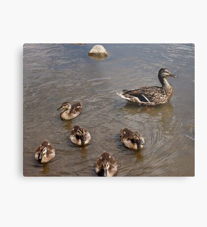 Adventures with Mama Metal Print