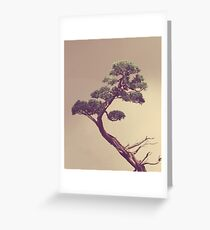 The Bonsai Greeting Card