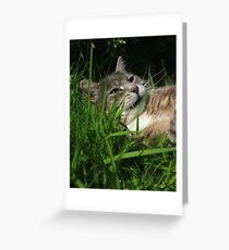 Tabby cat playing with toy mouse Greeting Card