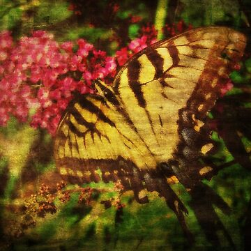 Swallowtail Butterfly Grunge by angelandspot