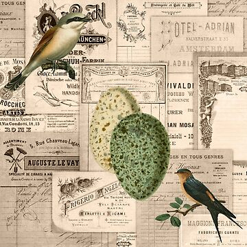 Vintage Birds, Eggs, and Ephemera by angelandspot