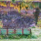 Bench For Day Dreaming by Bo Insogna