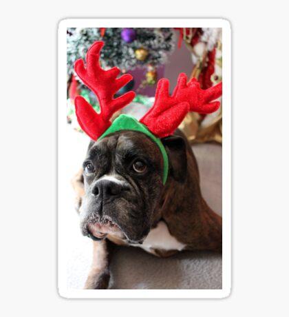 Rentier dieses Jahr? ...... Alles für dieses Plätzchen! - Boxer-Hunde-Reihe Sticker