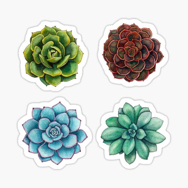 Succulent Sticker Set Sticker