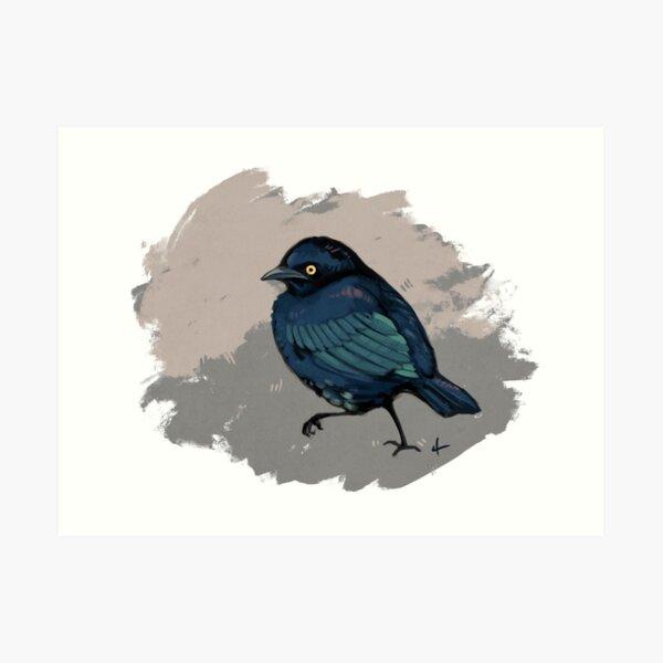 Brewer's Blackbird Art Print