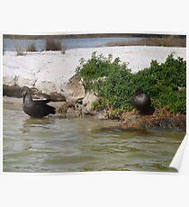 Wild ducks 2 Poster