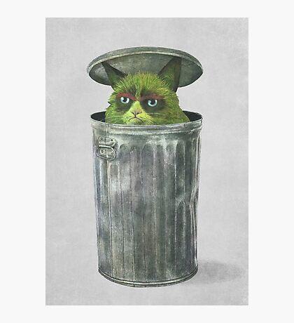Grouchy Cat  Photographic Print
