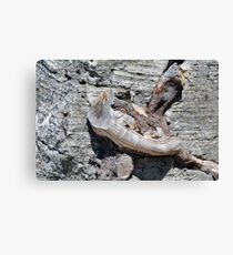 Wood texture on gray stone background Canvas Print