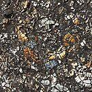 Crushed seashells background by dominiquelandau