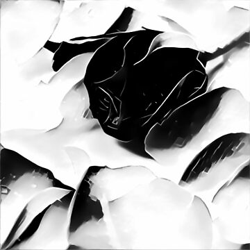 Black Rose by solnoirstudios