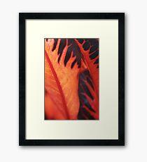 Orange leaf Framed Print