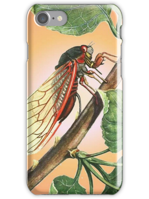 Vector Image of A 17 Year Cicada by taiche