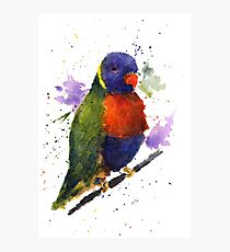 Watercolor Lorikeet at the Pet Store Photographic Print