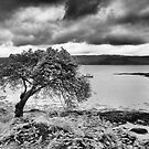 Tree on the Coast by Kasia-D