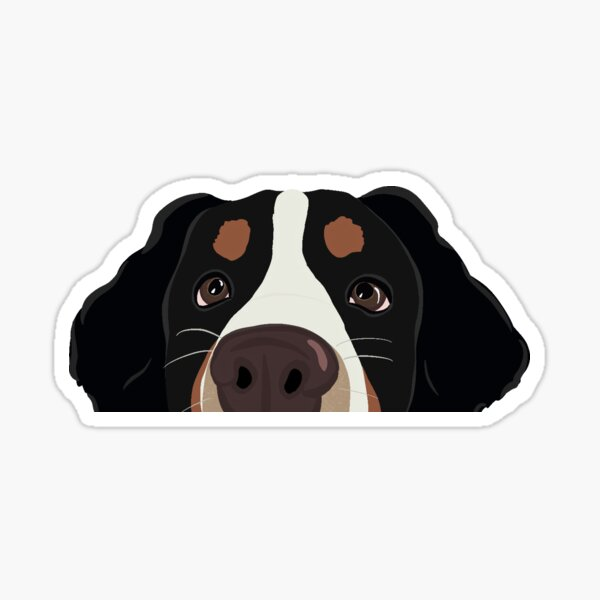 Curious Bernese Mountain Dog  Sticker
