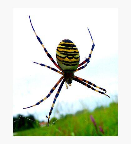 Wasp Spider Photographic Print