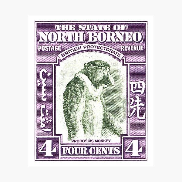 1939 North Borneo Proboscis Monkey Stamp Photographic Print