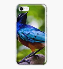 Superb Starling iPhone Case/Skin