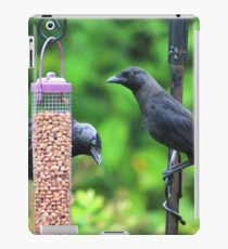 Young jackdaws on bird feeder iPad Case/Skin