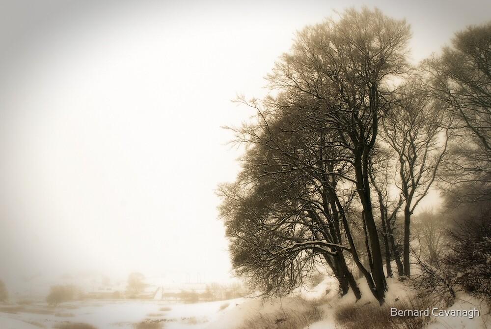 Winter 09 by Bernard Cavanagh