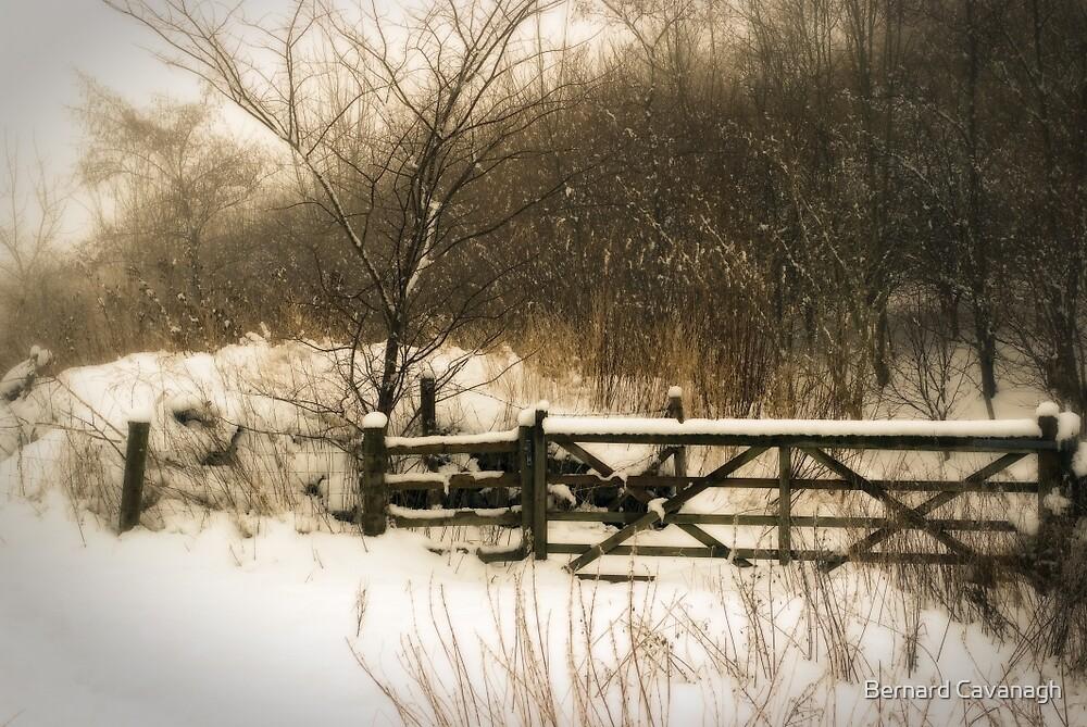 Winter 07 by Bernard Cavanagh