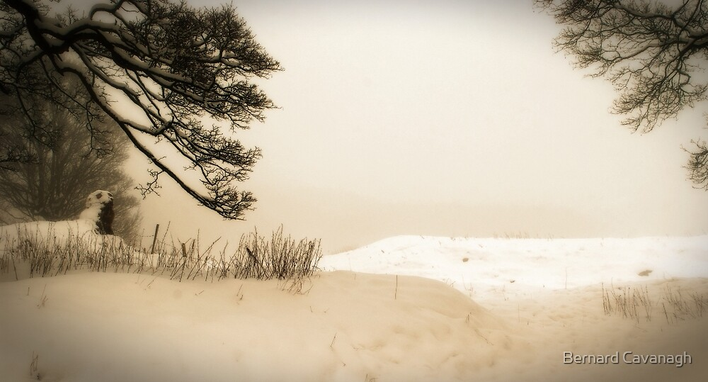 Winter 04 by Bernard Cavanagh