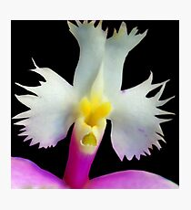 Beaker - Orchid Alien Discovery Photographic Print