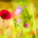 Poppy by David Tovey by David Tovey