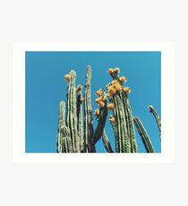 Mexican Organ Pipe Cactus Art Print
