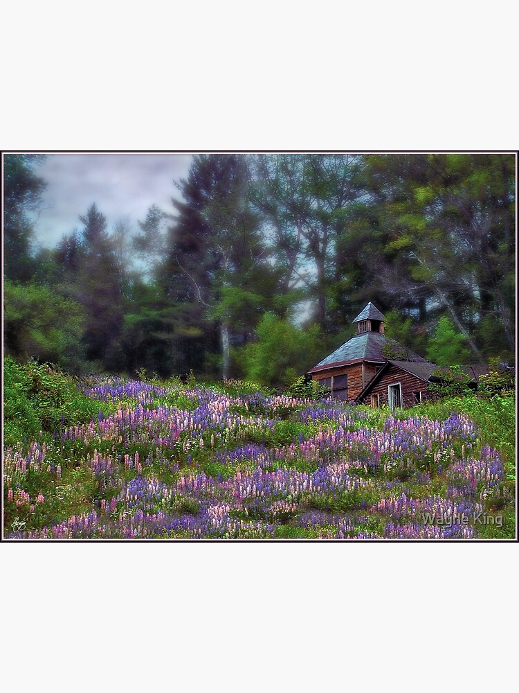 Cabin in the Lupine - Large Format Edition by waynedking