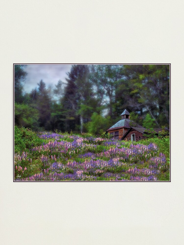 Alternate view of Cabin in the Lupine - Large Format Edition Photographic Print