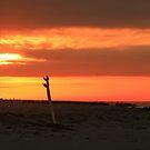 Seaside Sunrise by AnneDB