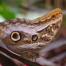 Butterfly 2 by David Galson