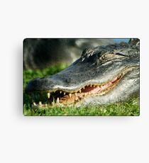 Laughing Gator Canvas Print
