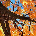 Glowing Autumn Tree by Rebecca Bryson