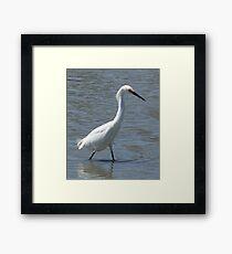 Snowy Egret, San Francisco Bay Framed Print