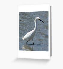Snowy Egret, San Francisco Bay Greeting Card