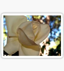Ivory rose against the sky Sticker