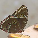 Butterfly 3 by David Galson
