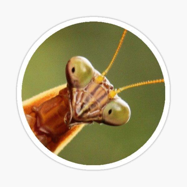 Mantis Against Mottled Green Sticker