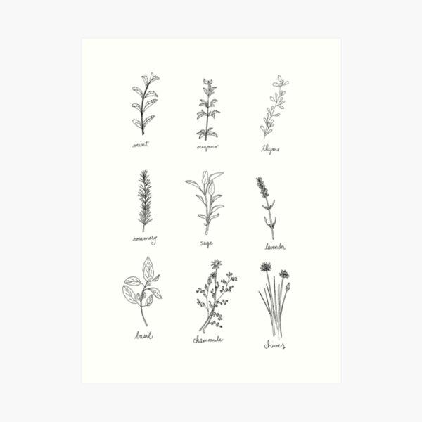 Herb Sketches Art Print